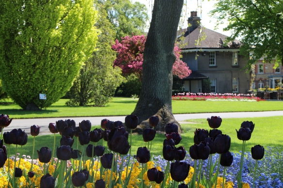Again, this is the director's home. Can you imagine having the National Botanic Gardens as your yard? Black tulips! (And best of all, someone else to keep it neat and trimmed.)