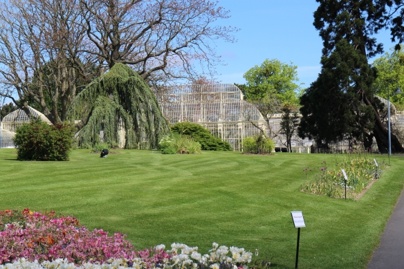 This is the curvilinear glasshouse range, built piecemeal from 1843–1869. It was restored in the 1990s. I only made it up as far as the bed of alliums you see on the right-hand side of this photo.