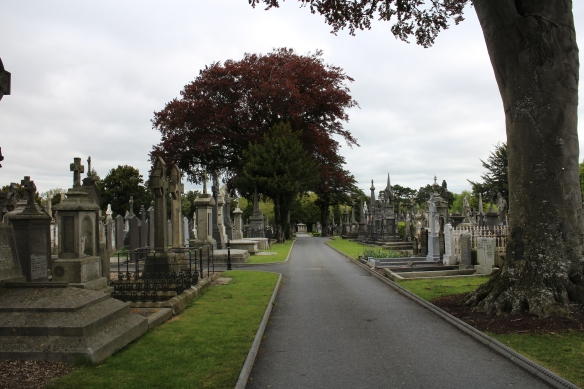 Wide avenues with lovely vistas make it a nice walk. Glasnevin Cemetery, May 2013.