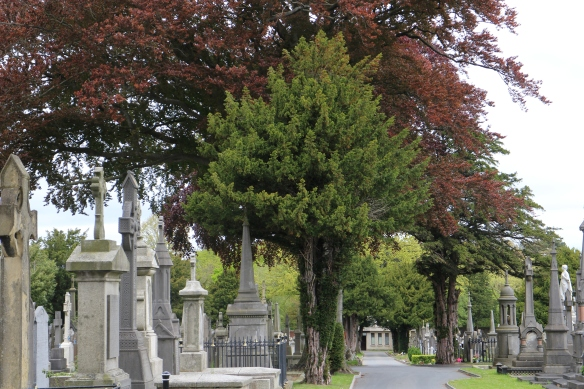 I was fascinated by the trees. Glasnevin Cemetery, May 2013.