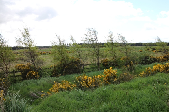 The property next to the rest area was beautifully landscaped. The wild gorse (yellow) was just brilliant!