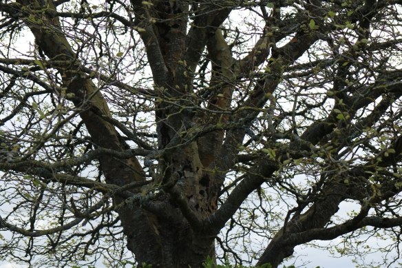 With gnarled old trees that look like they date from before Patrick's time, you can see why so many Irish folk tales—banshees, pookas, crows, and such—are dark.