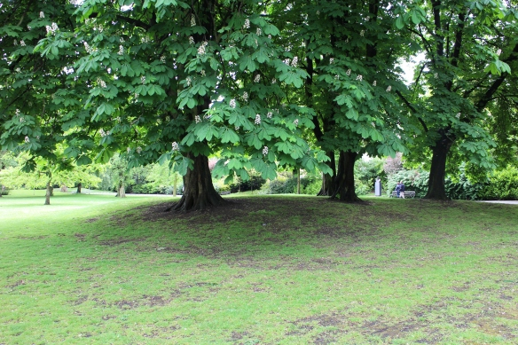 And these! There are more than 750 species of trees in Stephen's Green.