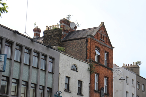 The chimneys of Dublin always fascinate me—especially when there are trees growing from them!