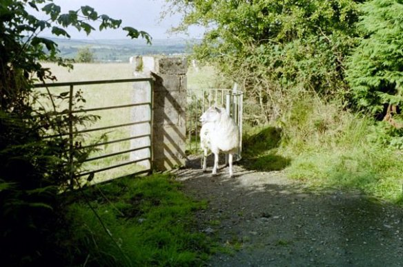 Beware the Stealth Sheep!