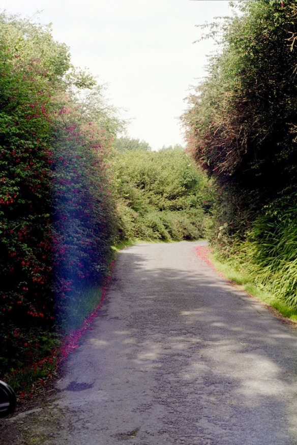 We drove up this lane, the fuchsias brushing the car on both sides, the bees a-buzzing. To Drombeg, 2003.