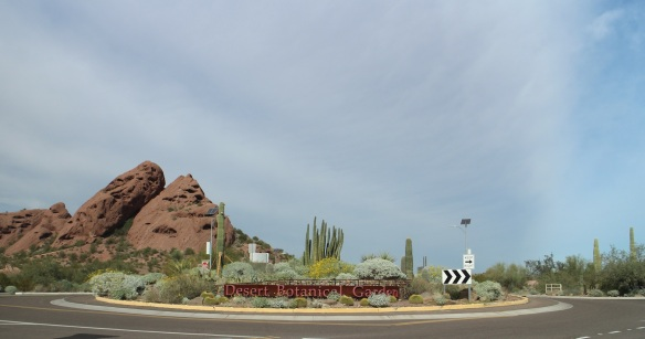 The Desert Botanical Garden