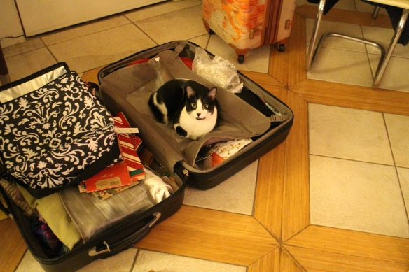 I've never met a cat that didn't love a suitcase. This is Penny.