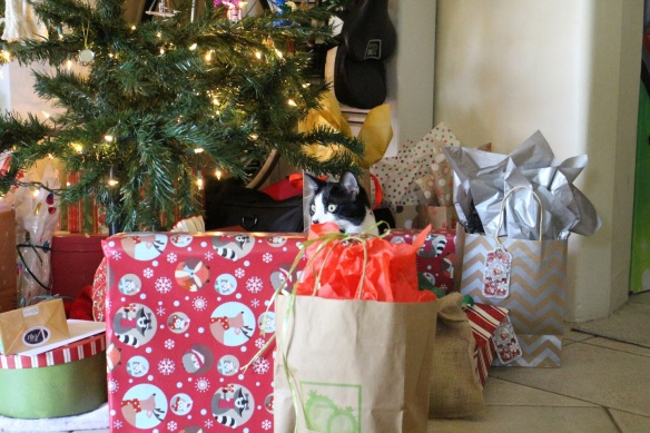 Penny among the presents!