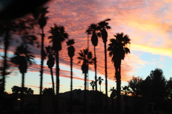 Here's one down low—a gorgeous Phoenix sunset, even if the palms are blurry (because Jesse was driving while I was photographing).