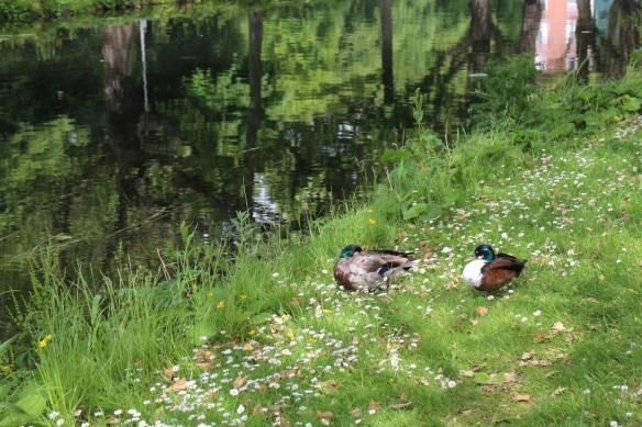 We even ran into some ducks having a nap.