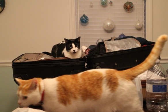 Penny and Spot (foreground).