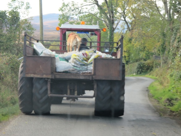 An old farm truck, with the farm dog riding shotgun. They were moving very slowly.