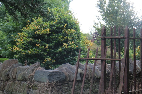 A pretty bush behind iron and stone fences.