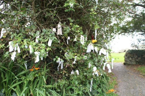 I'd heard of rag trees but hadn't seen one until this day.