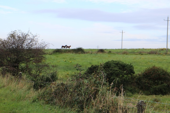 And while I was at it—I was just parked on the side of the road—I saw these two horses in the distance.