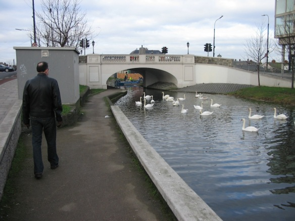 Gerry … and the swans on the Grand Canal. Dublin, 2006.